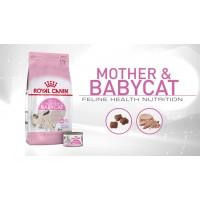 Royal Canin Mother&Babycat для беременных и кормящих, а также для котят